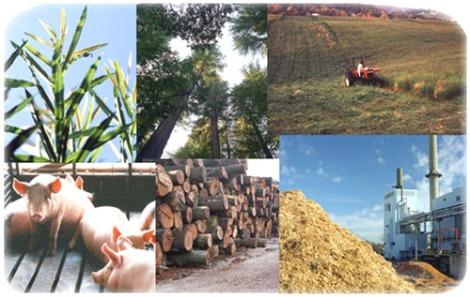 biomassa31